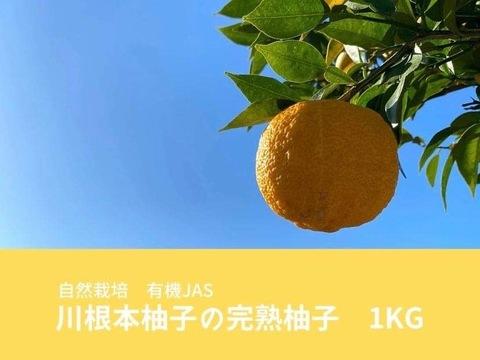 【12月上旬発送】自然栽培 川根本柚子の完熟柚子 有機JAS 1kg