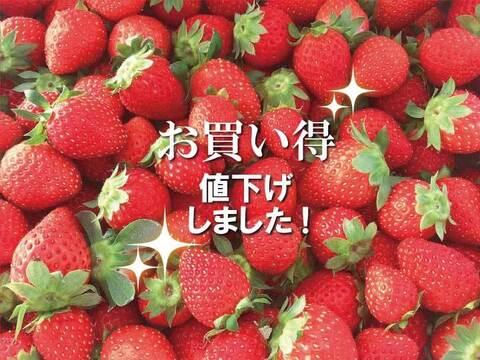 《パクパクが止まらない♪》小粒ちゃんイチゴ 埼玉県羽生市産
