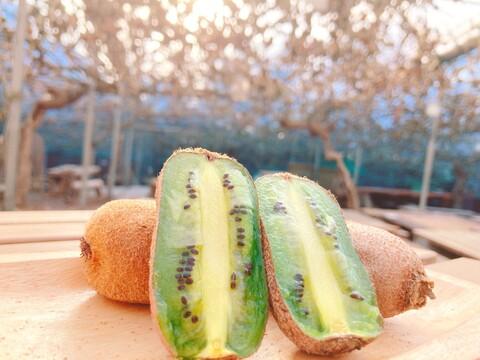 B級品の熟成したおいしい静岡県産香緑キウイSサイズセット