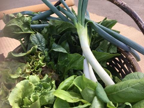 ようやく成長!信州の冬越し春のお野菜セット【5品位】
