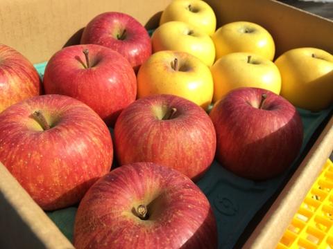【丸かじりサイズ】志賀高原の麓のりんご サンふじとシナノゴールド 3kg