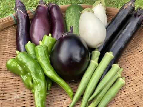 【フードロス特価】ナスを中心とした6種野菜セット/80サイズのダンボールいっぱい(農薬不使用)
