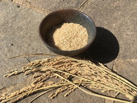 幻の農林48号(うるち米)玄米
