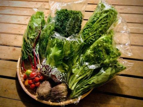 野菜ソムリエ推奨!ご夫婦二人で食べきり量のサラダボウルが作れる詰め合わせセット【鮮度抜群!サラダ野菜少量サイズ8品目】