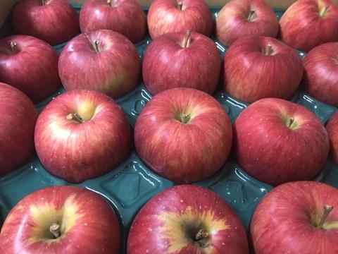 【青森県産りんご】シナノスイート 家庭用 キズ有 約5kg×2箱【人気】