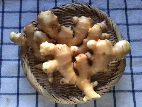 奇跡の生姜!?/高知の生姜1kg+お野菜約6種類セット