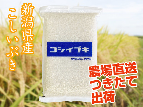 【朝専用あっさり米】令和3年産新潟県長岡産こしいぶき白米5kg