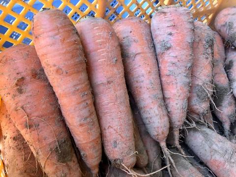 【北海道・芽室】甘みあるニンジン🥕無選別【農薬化学肥料不使用】(3kg)