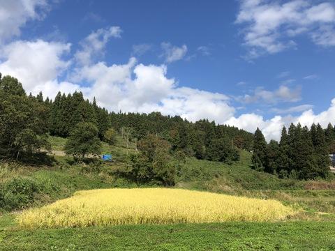 在庫処分 あっさり系のお米【5kg】ササシグレ 化学肥料不使用 減農薬栽培初期除草剤1回限り