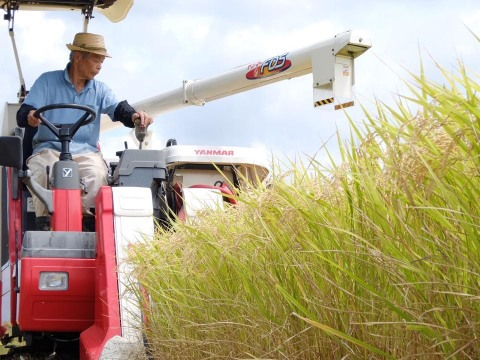 <SALE>農業歴60年越えのベテランが作ったコシヒカリ 5kg【白米】令和元年産