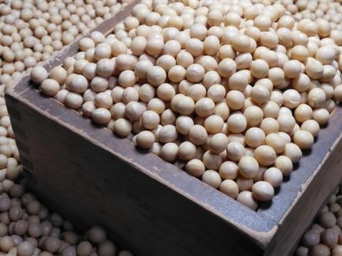 豆腐、煮豆、納豆、味噌、なんでもいけるぞ! 大粒大豆 とよみづき (870g)メール便 手選別