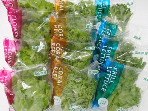 【お徳用】【無農薬栽培】富山の植物工場野菜セット24袋入+ベビーリーフミックス3袋付【5種類のレタスから組み合わせ】