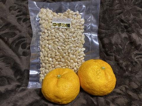 【天領日田】柚子の種 150g【化学肥料不使用】