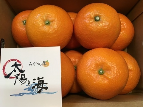 愛媛の伊予柑☆混合サイズ☆ご家庭用☆⒉5kg