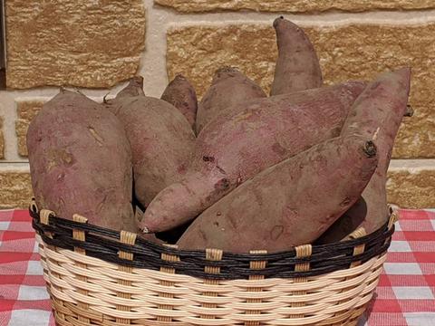 完売御礼【熟成3ヶ月】甘い😍うまい😍自然栽培サツマイモ・紅はるか2kg