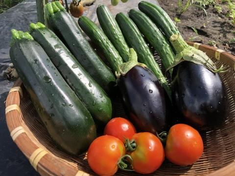 定番!おまかせ旬の夏野菜セットBBQなどにオススメ(80サイズ)