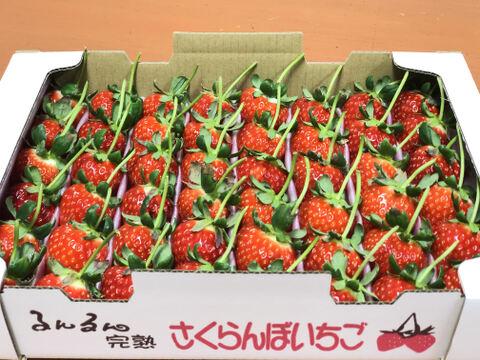 【直前割☆】5月18日発送!大切な方へ明日!イチゴで想いを届ける!「恋みのり(2L以上)」(1.3kg)*当日14時まで注文受付