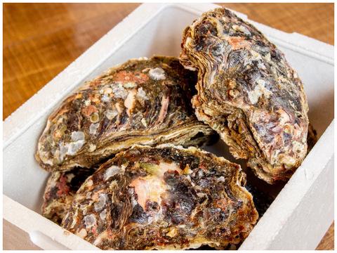 【今が旬】徳島県産 天然 岩牡蠣