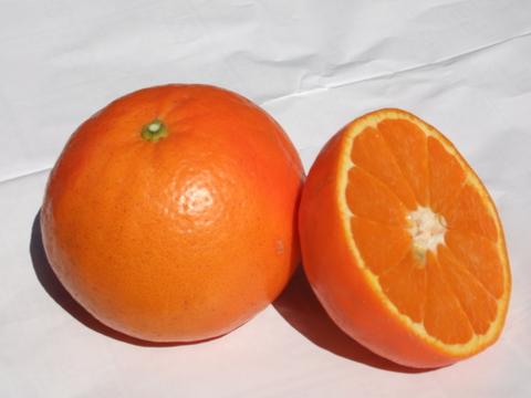 セミノール『グランクリュ・なべしご』大玉2L~3L  3Kg(15個程度)化学系農薬を使わない栽培