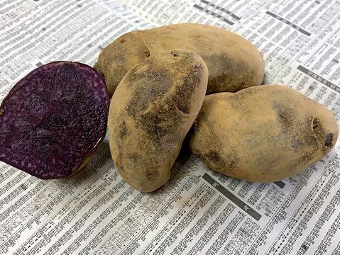 JAS認証 有機栽培 栄養豊富 じゃがいも シャドークイーン 5kg