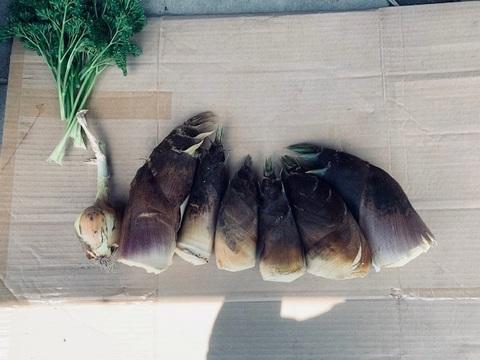 京都産 丹波タケノコ 採れたて柔らか 自然栽培(無農薬・無肥料・除草剤不使用) 筍