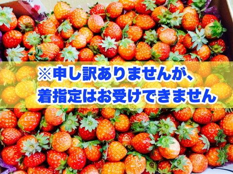 加工向けご家庭用小粒★夏秋いちご 内容量約1.2キロ
