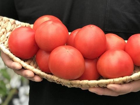 濃い恋トマト【季節限定】 約1,600g (16~20ヶ位)