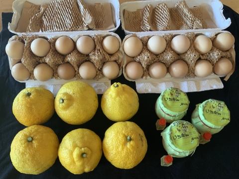 ちょっとお得!いちえん農場セット 旬の柑橘&卵とプリン
