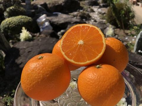 【3Lサイズ5kg】94歳とみ子ばぁばの清見オレンジ