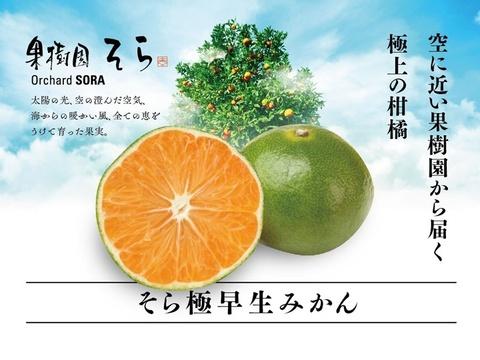 みかん【天空の果実】そらみかん極早生2.5kg