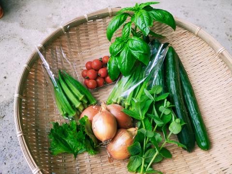 【大きめサイズ】しまなみ旬野菜の玉手箱