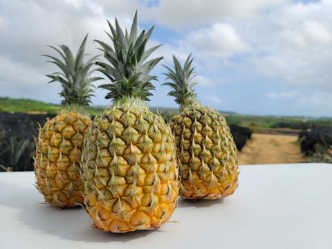 《極上パイナップル》石垣島産スナックパイン 3玉入り(2.5kg)