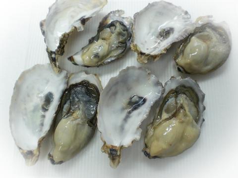 【緊急値下げ】SSサイズ牡蠣 4kg(約80粒)宮城県産 殻付き 牡蠣 殻付き【無選別牡蠣】牡蠣 殻付 カキ 加熱調理用 一年子