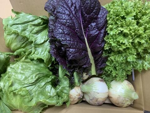 新玉ねぎ1.5kgとレタス2個とわさび菜とからし菜の淡路島からの旬の野菜セット❗️