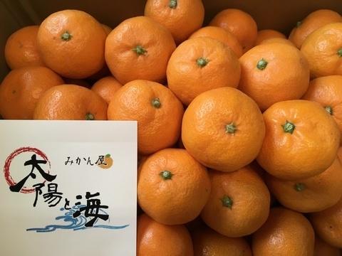 愛媛のみかん☆ご家庭用☆小玉サイズ☆5kg