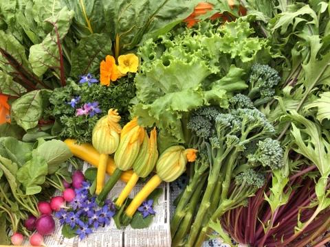 【北海道十勝産】お試し野菜セット(80サイズ)《7月分》