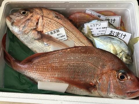 8月で出品最後‼️天然糸島真鯛2匹セット(1匹800g~1キロ)