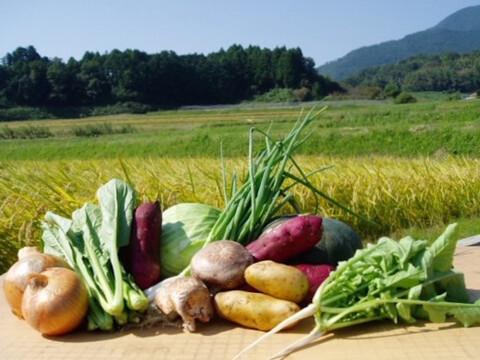 新鮮野菜*おまかせ詰め合わせ(8品目)