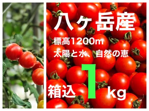 コクトマ! こくがあって味濃いめ 箱込約1kg  八ヶ岳産ミニトマト 調味料なくてもおいしい!  人気NO.1