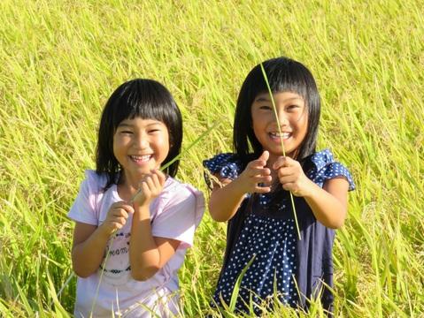 """""""新米""""特別栽培ミルキークイーン 5kg 白米(米おこし付き)"""