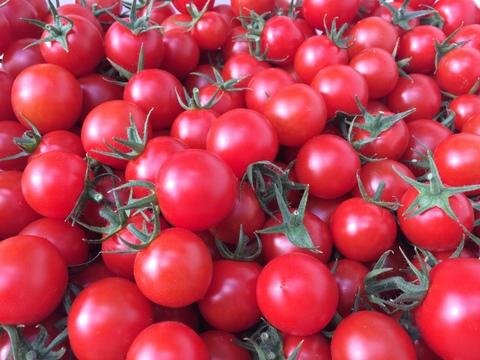 1番人気★名古屋の《甘》有機栽培ミニトマト【飯田農園】幻のmiuトマト1000gパック