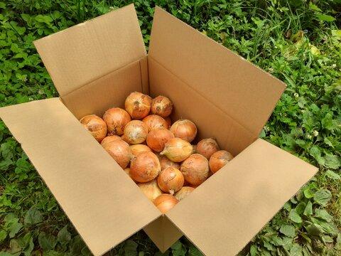 レシピ付き『子育て農家の玉ねぎ』10㎏箱入り 農薬・化学肥料不使用 常温便