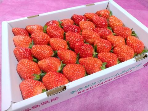 【いちご2品種セット】『やよいひめ』と『かおりの』たっぷりいちご【550g×2箱で1.1kg】
