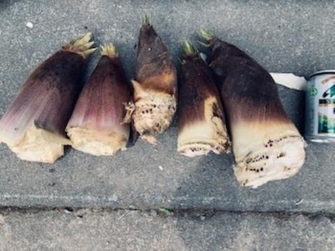 京都産 丹波タケノコ 朝採れたて柔らか 自然栽培(無農薬・無肥料・除草剤不使用) 筍