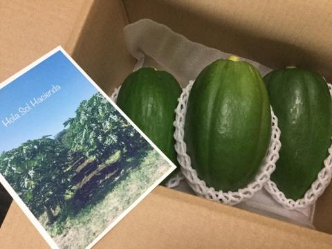 「旅する野菜」青パパイヤ2kg(10月分)