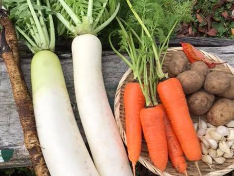 青森県八戸市南郷より 自然農法で育った 根菜セット【6品目】