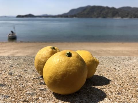 皮ごと安心!エビス農園の無人島レモン(1kg)