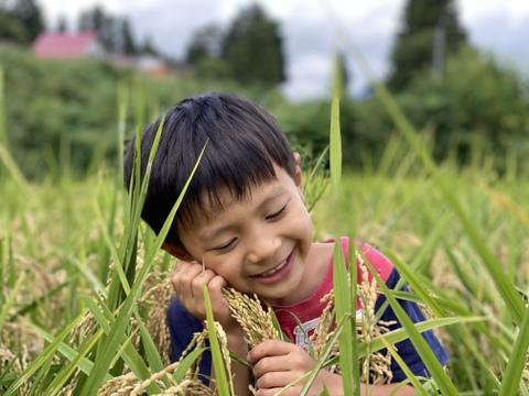 ササシグレ 農薬を使っていない弱アルカリ性のお米 合鴨農法 長野 飯山 真空パック