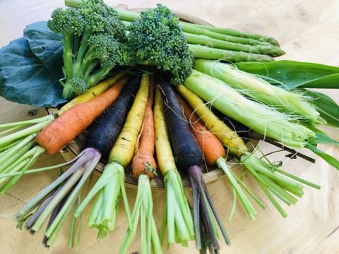 【小さな野菜だけのセット!】新潟県村上市からカラフルに直送します!