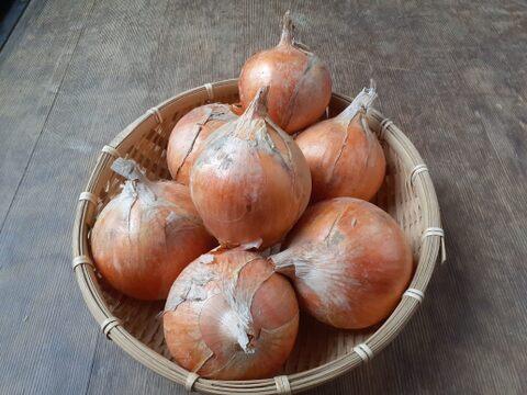 【野菜セット同梱専用】 子育て農家の玉ねぎ 2㎏/約7~12個
